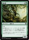 【JPN/IMA】根の壁/Wall of Roots『C』