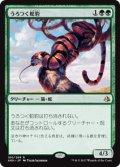 【JPN/AKH】うろつく蛇豹/Prowling Serpopard 『R』[緑]