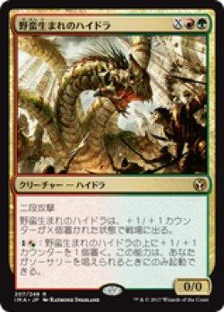 画像1: 【JPN/IMA】野蛮生まれのハイドラ/Savageborn Hydra 『R』 [マルチ]