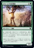 【JPN/THB】イリーシアの女像樹/Ilysian Caryatid 『C』 [緑]