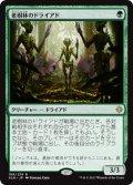 【JPN/XLN】老樹林のドライアド/Old-Growth Dryads 『R』 [緑]